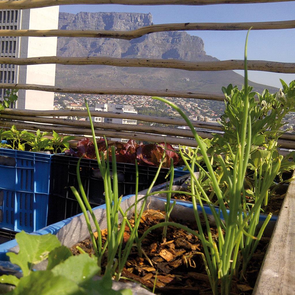 Garden Decor Cape Town: Design For Good