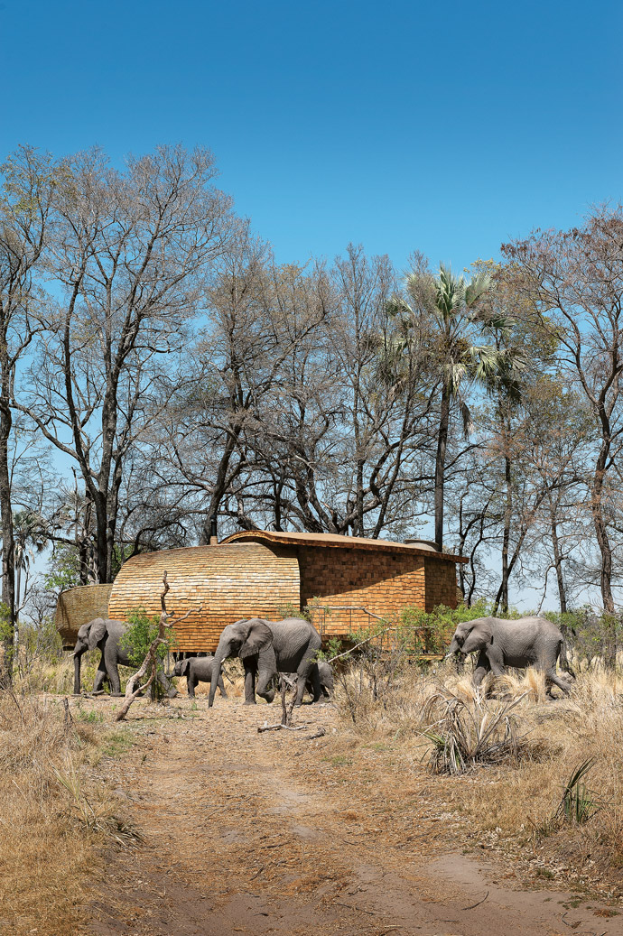 Sandibe is situated in some of the best game-viewing territory in the Delta.