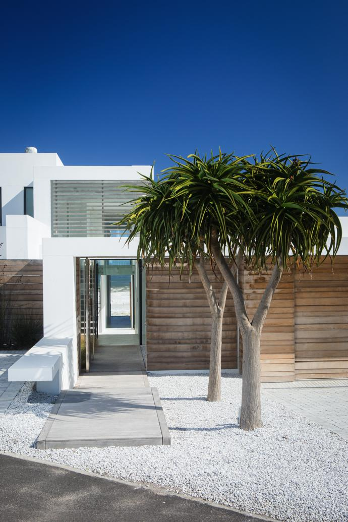 From the back of the house, the sea is visible the moment you open the front door. Apair of tree aloes from Habitat Mature Tree Nursery stand in a bed of crushed granite stone chips, giving the back yard awhitewashed West Coast feel.