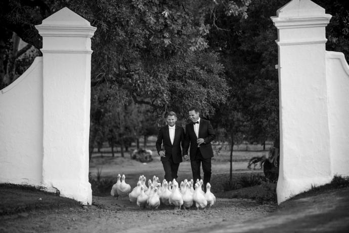 The couple arrived at the reception area accompanied by 40 white ducks, part of a flock that patrols the vineyards to rid the vines of snails and insects.