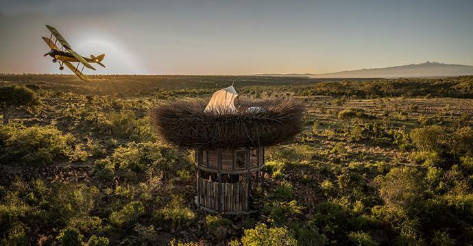 birds nest kenya1