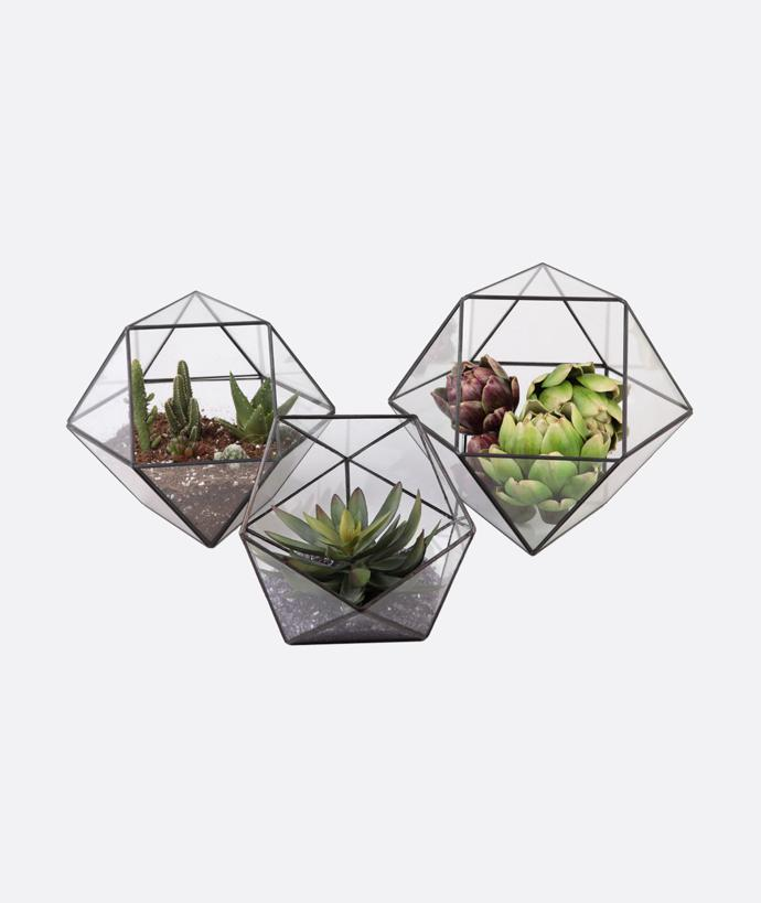 Geo Greenhouse Planter