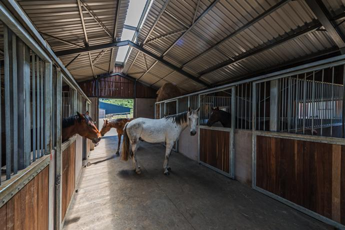 The stables have natural ventilation and free drainage.