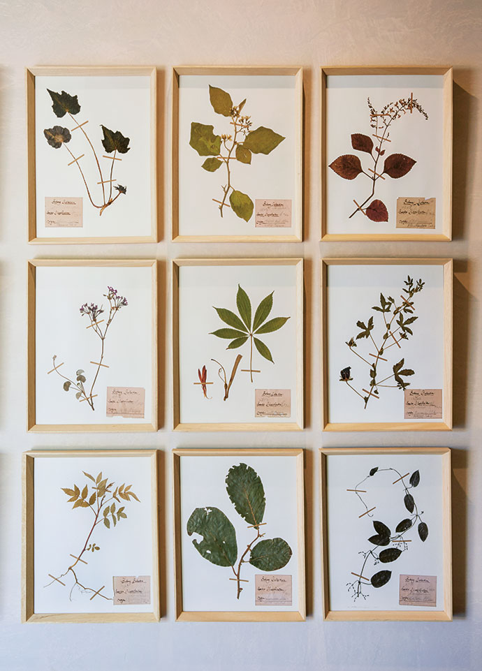 Framed pressed botanicals in the guest villa dressing area echo the landscape.