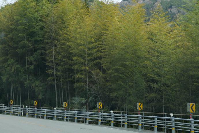 Bamboo grove, Kanagawa Prefecture